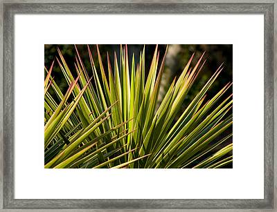 Yucca 1 Framed Print by Frank Tozier
