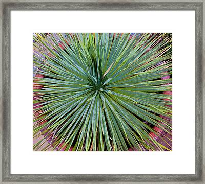 Yucca 2 Framed Print by Frank Tozier