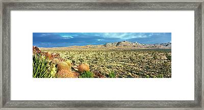 Yucca And Joshua Trees In A Desert Framed Print by Panoramic Images