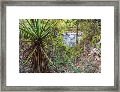 Framed Print featuring the photograph Yucca And Waterfall by Beverly Parks