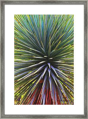 Framed Print featuring the photograph Yucca At The Arboretum by Tom Janca