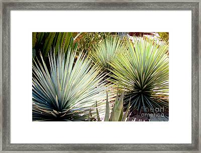 Yucca Explosion Framed Print by Marilyn Smith