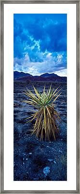 Yucca Flower In Red Rock Canyon Framed Print by Panoramic Images