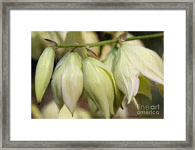 Yucca Flowers No. 1 Framed Print