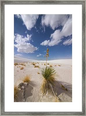 Yucca Growing On Dune In White Sands N Framed Print