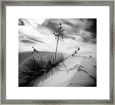 Yucca In White Sand Framed Print