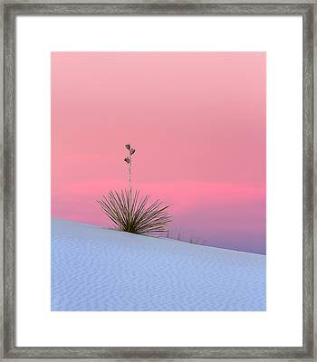 Yucca On Pink And White Framed Print