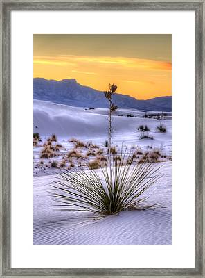 Framed Print featuring the photograph Yucca On White Sand by Kristal Kraft