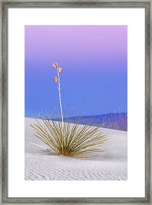 Framed Print featuring the photograph Yucca Pink And Blue by Kristal Kraft