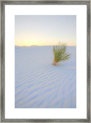 Framed Print featuring the photograph Yucca Plant At White Sands by Alan Vance Ley