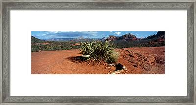 Yucca Plant Growing In A Rocky Field Framed Print