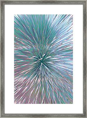 Yucca Plant Leaves Abstract Framed Print by Ben and Raisa Gertsberg