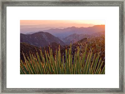 Yucca Spikes Framed Print by Adam Pender