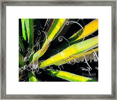 Yucca Spirals Framed Print