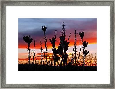 Yucca Sunset Framed Print