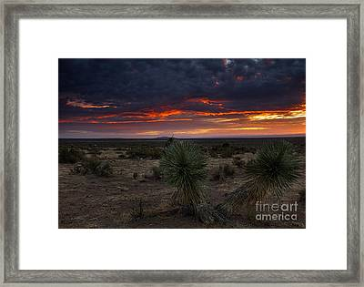 Yucca Sunset Framed Print by Mike  Dawson