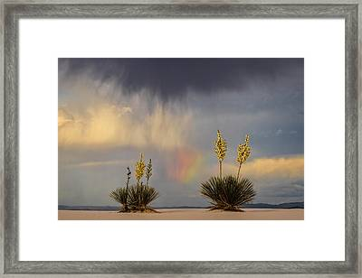 Yuccas, Rainbow And Virga Framed Print