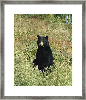 Yukon Black Bear Framed Print