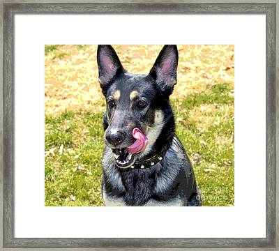 Framed Print featuring the photograph German Shepherd - Yum - Luther Fine Art by Luther Fine Art