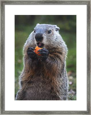 Yum-yum Framed Print by Paul W Faust -  Impressions of Light