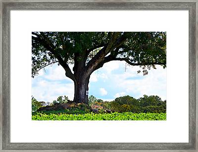 Yum Yum Tree Framed Print