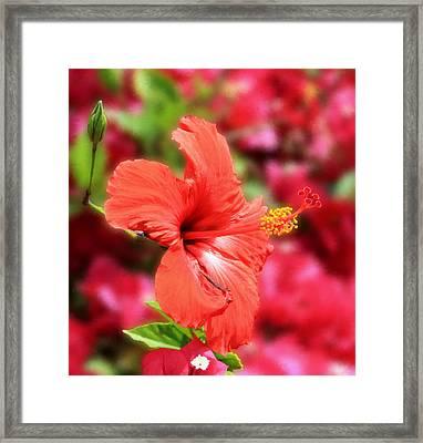 Yuma Flower No. 1 Framed Print by Paddrick Mackin