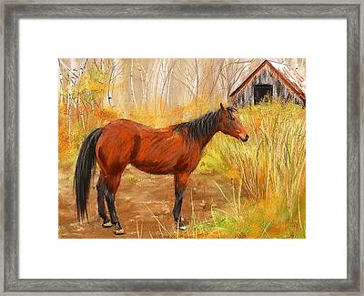 Yuma- Stunning Horse In Autumn Framed Print by Lourry Legarde