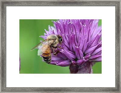 Yummm Chive Nectar Framed Print