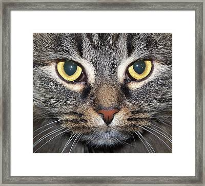 Yummy Cat Eyes Framed Print