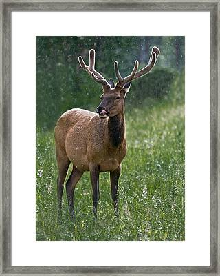 Framed Print featuring the photograph Yummy Raindrops by Tyson and Kathy Smith