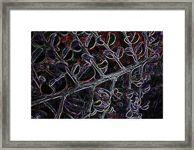 Z Fish Eye Framed Print