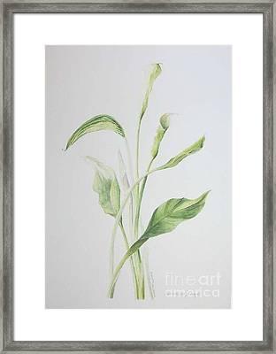 Zad A Bouquet Framed Print