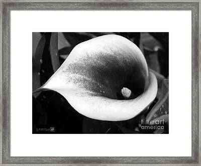 Zantedeschia Named Picasso Framed Print