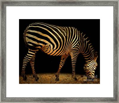 Zebra 20150210brun Framed Print by Wingsdomain Art and Photography