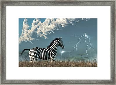 Zebra And Approaching Storm Framed Print