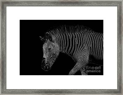 Zebra Art Framed Print