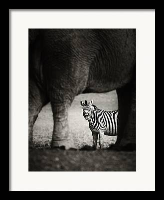 Laughing Photographs Framed Prints