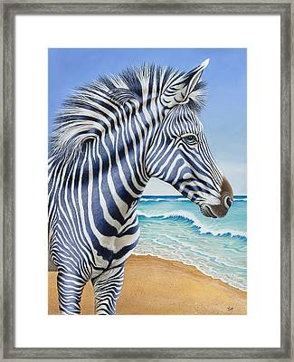 Zebra By The Sea Framed Print