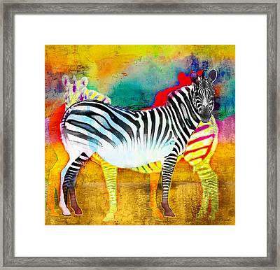 Zebra Colors Of Africa Framed Print by Barbara Chichester
