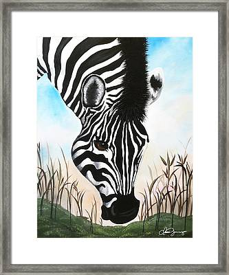Zebra Framed Print by Dani Abbott
