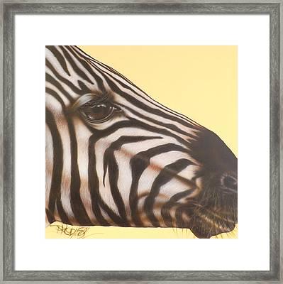 Zebra Framed Print by Darren Robinson