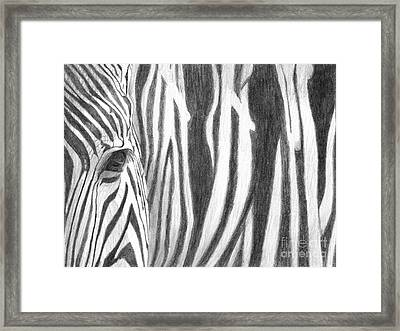 Framed Print featuring the drawing Zebra by Denise Deiloh