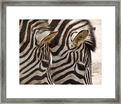 Zebra Double Framed Print