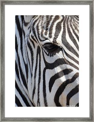 Zebra Eye Abstract Framed Print by Maria Urso