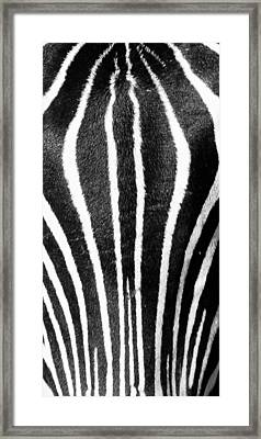 Framed Print featuring the photograph Zebra Face by Paul Miller