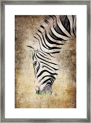 Zebra Fade Framed Print