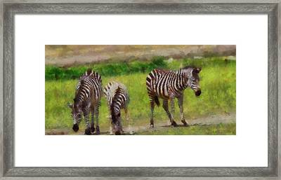 Zebra Family Framed Print by Dan Sproul