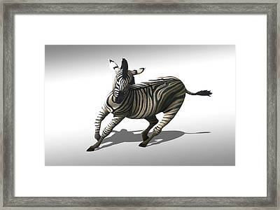 Zebra Galloping Framed Print by Mark Garlick