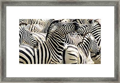 Framed Print featuring the photograph Zebra Gathering by Dennis Cox WorldViews