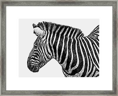 Zebra - Happened At The Zoo Framed Print by Jack Zulli